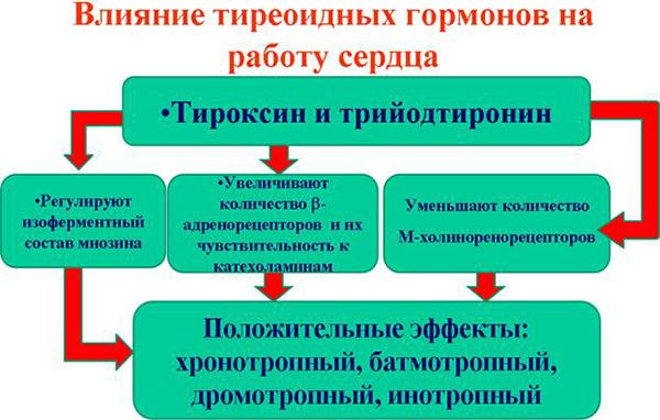 функции тироксина