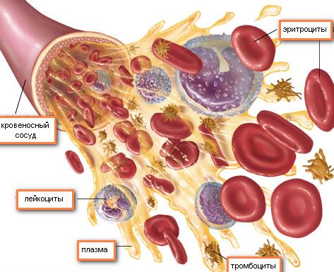 норма эритроцитов у мужчин