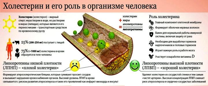 нормы холестерина у мужчин