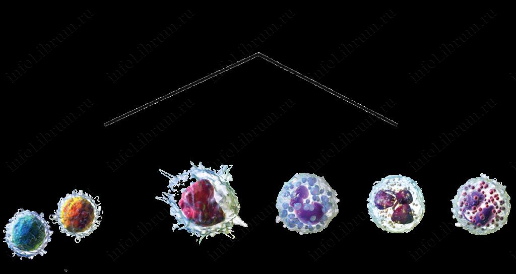 много лейкоцитов в крови что это значит