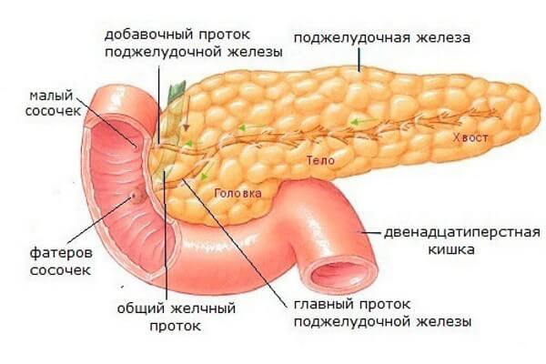 эхогенность поджелудочной железы