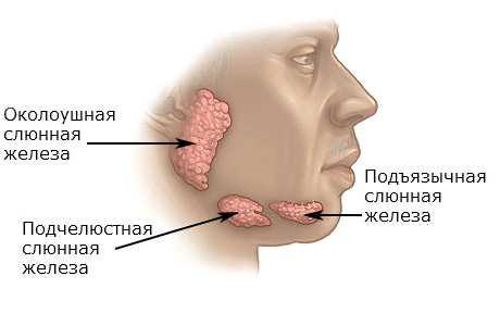 Какой врач лечит слюнные железы