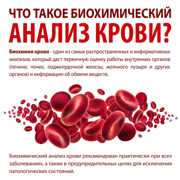 Повышен креатинин в крови: причины, симптомы, лечение